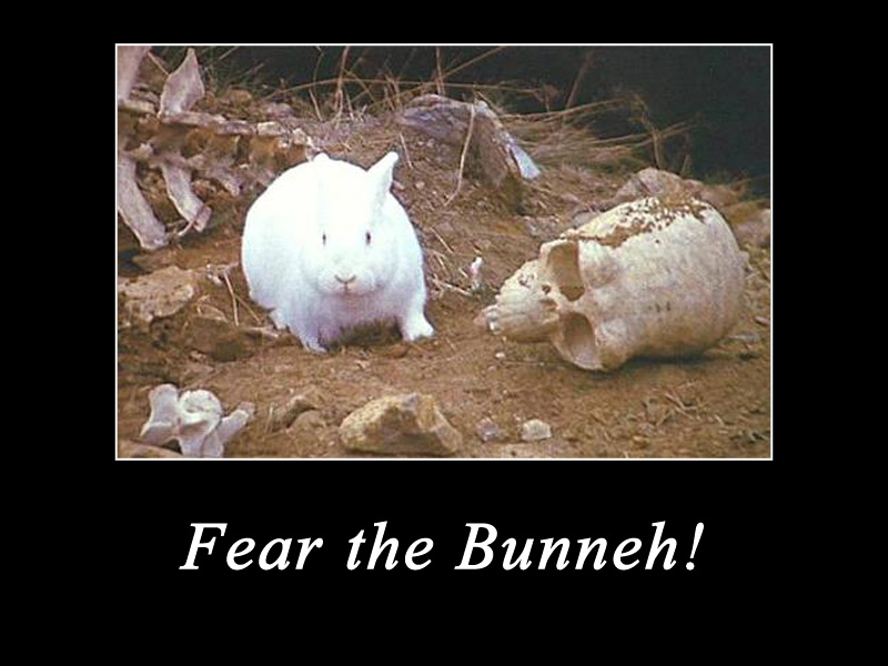 Fear the Bunneh